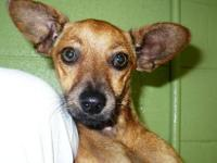 Dachshund - Digit - Small - Young - Male - Dog arrived