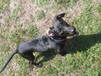 Dachshund - Jett - Small - Young - Male - Dog Jett is