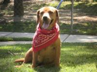 Dachshund - Lilly - Medium - Adult - Female - Dog Lily