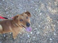 Dachshund - Monkey - Medium - Young - Male - Dog