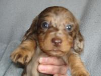 2 Females and 3 Males available in this litter born Feb