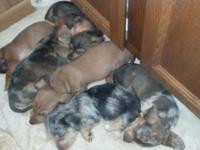 We have 5 new puppies readily available to enter a