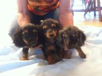 Born-6-15-15 and they are ready to go to a new home