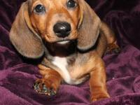 ***ONLY 3 LEFT*** I have 4 beautiful friendly dachshund