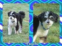 Dagoba's story Dagoba (Dag) is a 1 year old Terrier mix