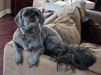 Dahli's story Dahli is a 6 year old Shih-Tzu/Lhasa Apso