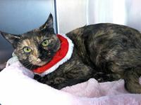 Dahlia- A Loving Kitty!'s story This beautiful tortie