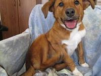 DAISEY's story Daisey is a beautiful shepard mix who
