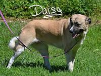 Daisy's story Daisy is a big gentle baby looking for a