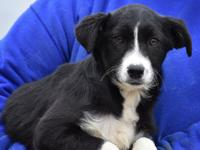 Up for adoption, meet Daisy! Daisy is a black/white