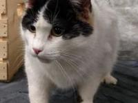 Daisy's story Are you looking for a 3D kitty (dynamite,