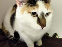 Daisy's story Sweet older cat who is looking for a