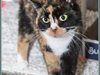 DAISY's story $97.50 FEE INCLUDES: neutering/spaying,