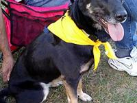 Daisy's story Daisy is a two-year-old shepherd mix who
