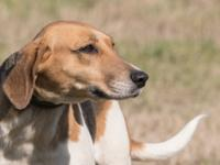 Daisy is as sweet as her name.  She is a hound mix,