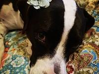 My story How this sweet girl hasn't been adopted yet is