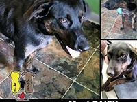 DAISY's story MEET DAISY! A 9-10 month old, female,