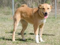 Miss Daisy is a 1.5 y/o female Lab mix, 60.4 pounds,