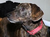 Daisy's story 25700  Daisy is a shy girl looking for