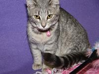 Daisy (Spayed)'s story Daisy is a cute 7-month old