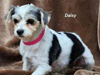 Daisy's story Please contact Constance