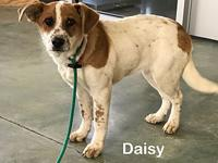 Daisy's story Daisy is currently in our foster care