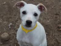 Daisy is a three month old, small mix breed pup. We