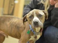 Dakota's story !!! AVAILABLE for Adoption at ACCT