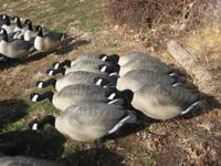 Selling 6 dozen Dakota full body Canada goose decoys.