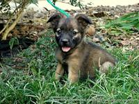 DALE's story ADOPTION INFORMATION IS LOCATED ON OUR