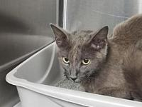 Dalilah's story By adopting me today you will save the