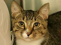 Dallas's story Dallas is a friendly, affectionate 9