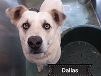 Dallas's story Say Hello to Dallas. His is an owner