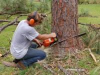 Sal�s Landscape & Tree Service is a leading tree