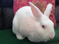Dallas is a friendly rabbit who isn't shy about asking