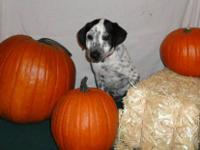 Dalmatian - Clyde - Large - Baby - Female - Dog Clyde