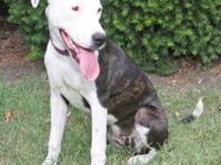 Dalmatian - Molly - Medium - Senior - Female - Dog