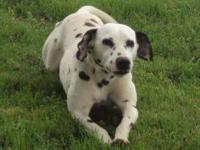 I have 2 dalmatians that i need to find good homes for.
