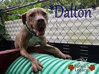 Dalton's story Meet Dalton! Dalton is an energetic pup