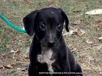 DALTON's story ADOPTION INFORMATION IS LOCATED ON OUR