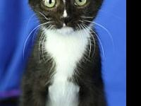 Dalton's story I am a black tuxedo. I was found in