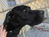 Damon's story Damon is a sad case. Seized for neglect,
