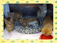 DANDY's story This orangey pile of cuteness was brought