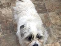 Dandy is a 2 year old neutered male maltese mix who