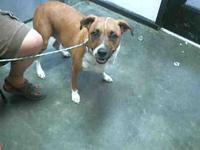 DANIELLE's story City of Tulsa Animal Welfare Tuesday