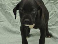 Danny's story Six 6 week old puppies were abandoned at