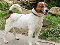 My story Danny is an 8 year old Jack Russell, he is on