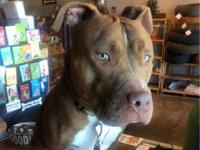 Dante is currently in FOSTER CARE. Please call the