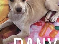 Dany's story Dany is a 11 week old female. She is