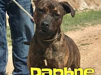 Daphne's story Daphne is a 1 year old, female, brindle